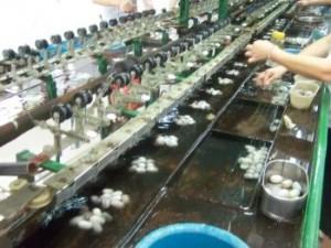 Dévidage des cocons de soie