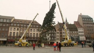 grand sapin de Strasbourg